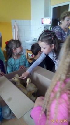 Kačátka ve školce